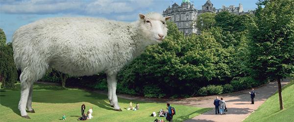 Sheep Exhibit National Museum of Scotland